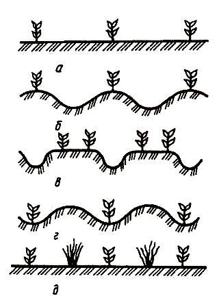 Разновидности профилей дневной поверхности поля после посадки либо посева