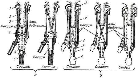 схема работы двухкамерного доильного стакана