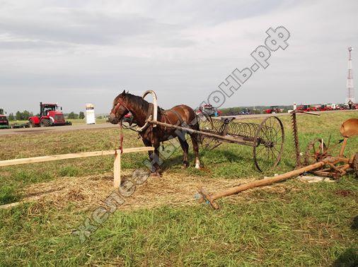 Конь с граблями для сена, демонстрационная площадка агрофорума | Всероссийский день поля 2016